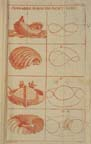 A page from the Textbook for Artists by Christian Ludolph Reinhold, 1784