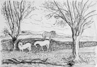 Landscape and Horses